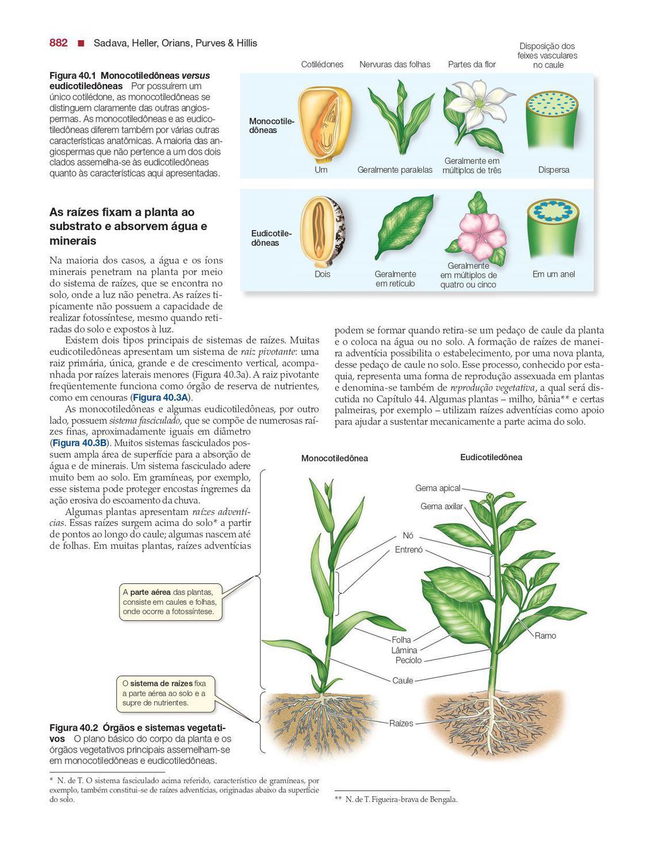 Livro Vida A Ciência Da Biologia Volume 3 Plantas E Animais