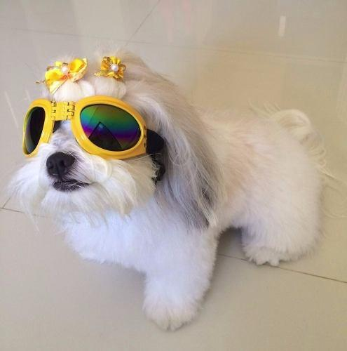 Oculos De Sol Para Cães Com Proteçao Uv - Pet import R  74,00 à vista.  Adicionar à sacola ad8e787a12