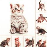 3 Guardanapos descartáveis gatinhos HOF211535 pct com 20fls - Home fashion