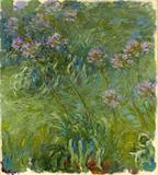 Agapantos (1914) - Claude Monet - Tela 30x33 Para Quadro - Santhatela