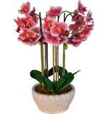 Arranjo Artificial Orquídea Falenópsis Vermelha 55 cm - Kasacia