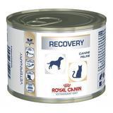Canine e Feline Recovery Wet 195gr - Cães e Gatos - Royal canin