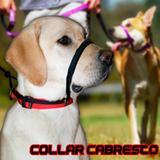 Coleira Cabresto Para Cães - Molinas pet