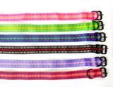 Coleira de nylon para cão diversas cores tamanho 10 - Promaster