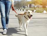 Guia Coleira Retratil Para Caes Cachorro 3M* - Bom amigo pet