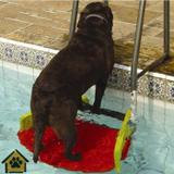 Plataforma Para Piscinas Anti-Afogamento de Cães Savedog - Save dog