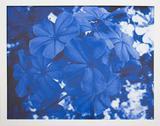 Quadro com Moldura Branca Árvore com Flores Azuis 50x40cm - Decore pronto