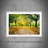 Quadro decorativo com fotografia  tamanho 30 x 40 cm  Paisagem no Jardim Botânico em Milão na Itália - Colours  creative photo decor