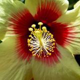 Quadro Flor por Laura Chiesa - Cuadrado
