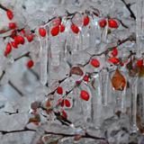 Quadro Frozen por Bruna Chiesa - Cuadrado