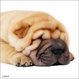 Quadro Impressão Digital Cachorro Marrom 30x30cm Uniart