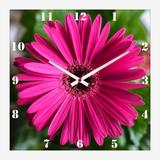 Relógio de Parede Decorativo Flor Margarida Barberton 30x30cm - Decore pronto