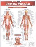 Resumao - medicina - sistema muscular avancado