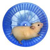 Roda De Exercícios Plástica Para Hamster E Semelhantes - Bragança
