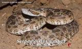 Serpentes da caatinga guia ilustrado - Ponto a editora