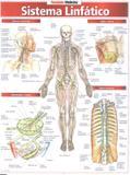 Sistema linfatico - Resumao