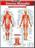 Sistema Muscular - Avançado - Barros fischer  associados