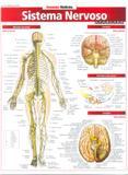 Sistema Nervoso - Barros fischer  associados