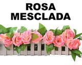Trepadeira hera rosa mesclada 2,4 metros - Wer