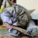 Varas Catnip Matatabi Limpa Dentes Deixa Gato Feliz 16 Unid. - Nycti br