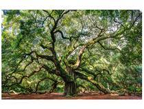 Adesivo De Parede Paisagem Arvore Angel Oak 2 Tamanho 110x68cm - Pegasus Decoração