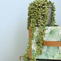 Arranjo de Planta Pendente Artificial no Vaso Cimento  Formosinha -