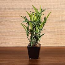 Bambu com Vaso Verde 22cm - ETNA