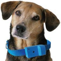 Coleira Anti-latido, Smart 2 Plus, Azul, Bateria p/ 6 meses, Não maltrata o animal - Amicus