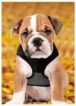 Coleira/Guia/Peitoral Retratil para Cães com até 1,2m - Lucky Leash