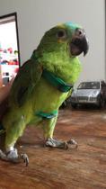 Coleira/Peitoral/Guia para Papagaio - VERDE BANDEIRA - DURAVEL - ENGATES RAPIDOS - DUPLA REGULAGEM - Happy Bird