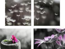 Compose 4 Quadros Decorativos em Canvas para Salas Quartos Floral PB II - Incasa Design