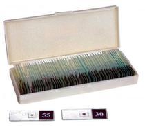 Conjunto de 60 Lâminas Biológicas Preparadas para Microscópio - Brink mobil