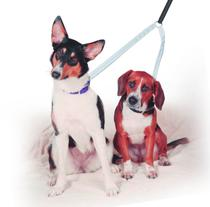 Guia dupla Adestramento E Passeio De Cães completa - Dedcases