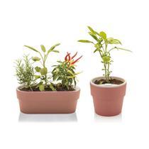 Kit de Vasos Autoirrigável Horta Marrom Terracota AntiDengue - Ou
