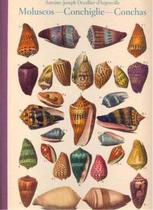 Livro - Moluscos - Conchiglie - Conchas -