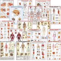 Mapa Anatomia Corpo Humano Sistemas Medicina Poster Papel - Multimapas