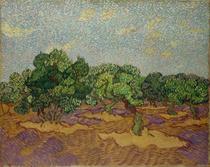Oliveiras em Flor (1889) - Vincent van Gogh - Tela 30x38 Para Quadro - Santhatela