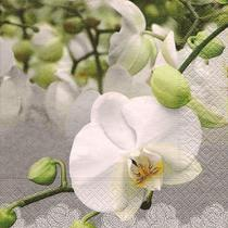 Pacote 20 Guardanapos Orchid Festival - Paper design