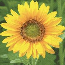 Pacote 20 Guardanapos Sunflower - Paper design