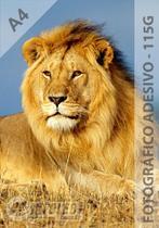 Papel Fotográfico A4 Glossy Adesivo 115g 20 Folhas - Infoléo
