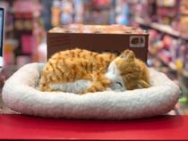 Perfect Petzzz - Gato Laranja de Pelúcia que Respira - 5 a 7 anos - de R 200,00 à R 299,99 -