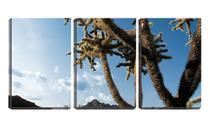 Quadro Decorativo 30x66 cactos sob céu azul - Crie Life
