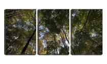 Quadro Decorativo 45x96 copas de árvores vista de baixo - Crie Life