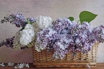 Quadro Decorativo Canvas p/ Lavabos Banheiros Quartos Vintage Flower - Incasa Design
