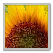 Quadro Decorativo - Girassol - 50cm x 50cm - 012qnfcb - Allodi