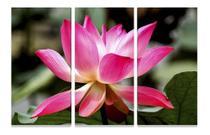 Quadro Flor De Lótus 120x60 Mosaico Flores Decorativo - Neyrad