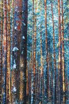 Quadro Impresso Em Vidro - Floresta No Inverno 591A - Arte No Quadro