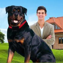 Sistema Inteligente de Treinamento Amicus Cães Plus - Tamanho G -