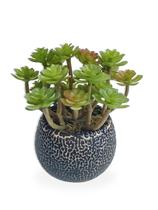 Suculenta Arranjo Flor Artificial Com Vaso Preto Em Cerâmica Estilo Kokedama - Flordecorar