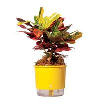 Vaso Auto Irrigável Raiz N02 Amarelo Pequeno 12x11 - Raíz vasos autoirrigáveis